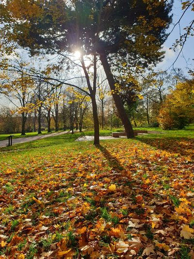 Sun shining through trees in park during autumn