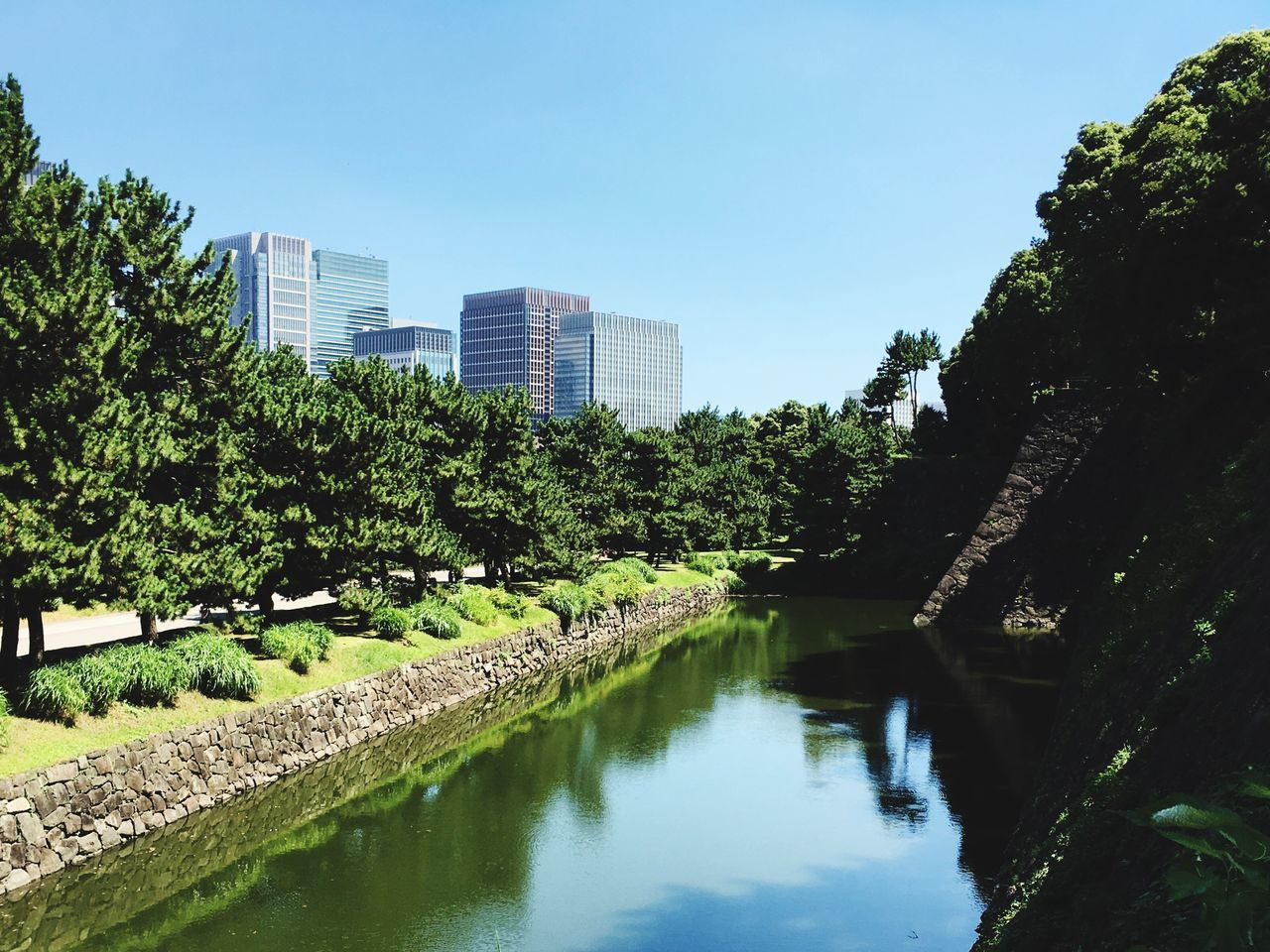 architecture, building exterior, built structure, tree, reflection, skyscraper, city, growth, modern, water, no people, outdoors, sky, clear sky, day, nature