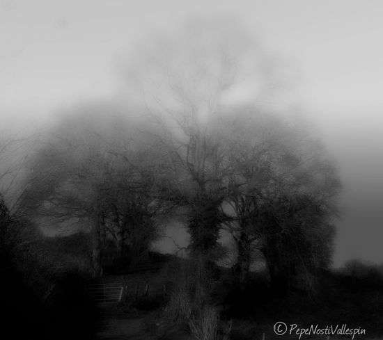 Fog Trees Beauty In Nature Outdoors Nature Tranquility Pola De Siero Blancoynegro Black And White Trees And Nature Asturias Paraiso Natural🌿🌼🌊🌞 Blackandwhite Black&white Blackandwhite Photography Blackandwhitephotography Poladesiero Outdoor Photography Black And White Photography