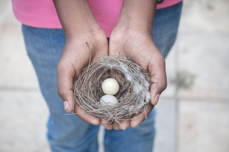 Midsection of man holding nest with egg