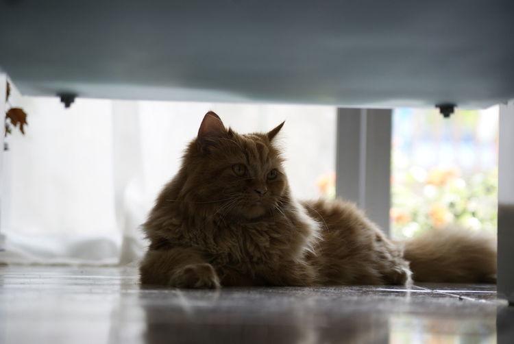 No People Cat