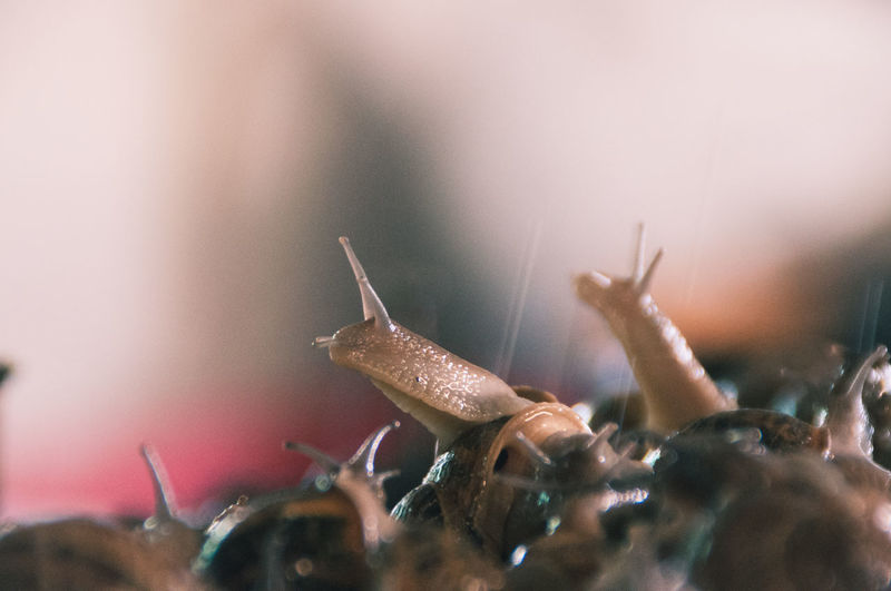 Animal Themes Close-up Composition Curiosity Curious Cute Eyes Focus On Foreground Friends Funny Growth Hello World Helloworld Hi! Like4like Nature Nice Selective Focus Small Snail Snails Tranquility Wet Whats Up Zoology