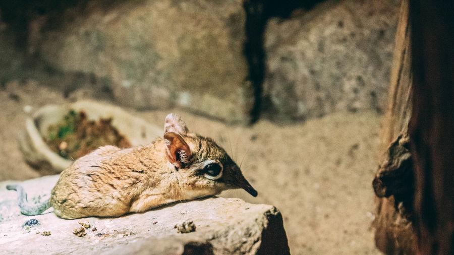 Mouse Sunbading Animal Sand Close-up