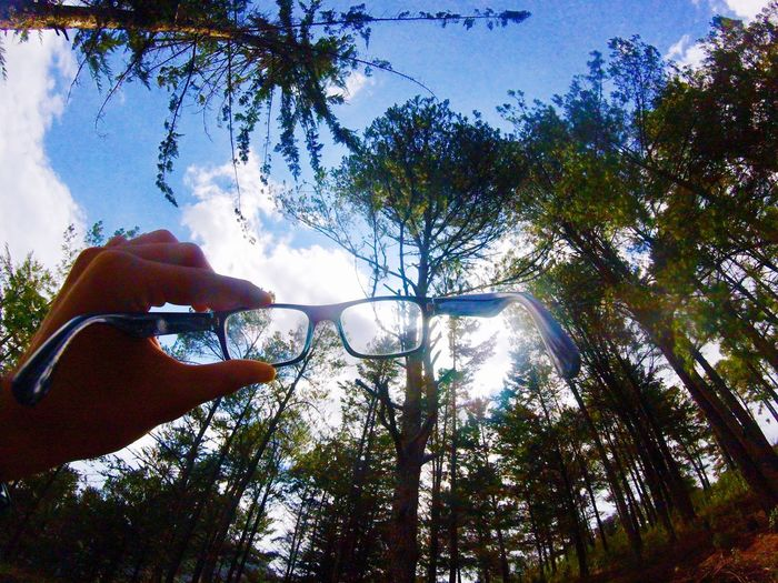 Tree One Person Real People Human Hand Human Body Part Day Outdoors Lifestyles Low Angle View Nature Branch Sky Beauty In Nature People