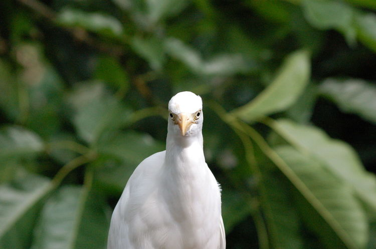 Animal Themes Animal Wildlife Bird Bird Perched Bird Watching Close-up Looking At Camera Nature Outdoors White Color