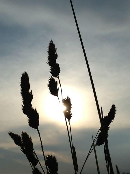 25 Days Of Summer Summer Nature Sunnydelight