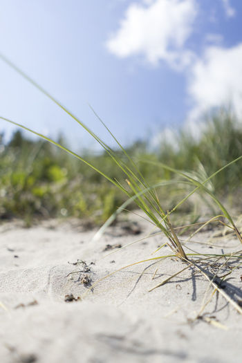 Grass Beach Beauty In Nature Close-up Day Field Grass Growth Nature No People Outdoors Sand Selective Focus Sky Tranquility