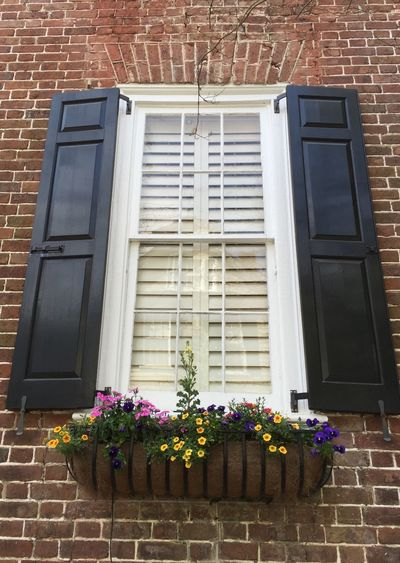 Flower Building Exterior Built Structure Window Outdoors Architecture No People Day Low Angle View Plant Nature Freshness Fragility Flower Head Charleston Window Flowers
