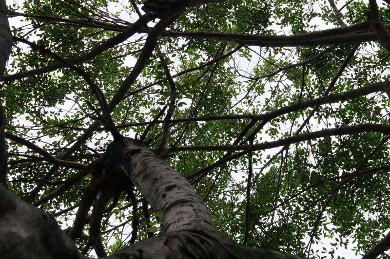 #branches #green #villahermosa Beauty In Nature Low Angle View Nature Outdoors Tree
