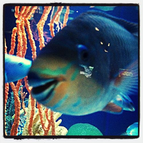 Fish Aquarium parrotfish ocean life pigeon forge