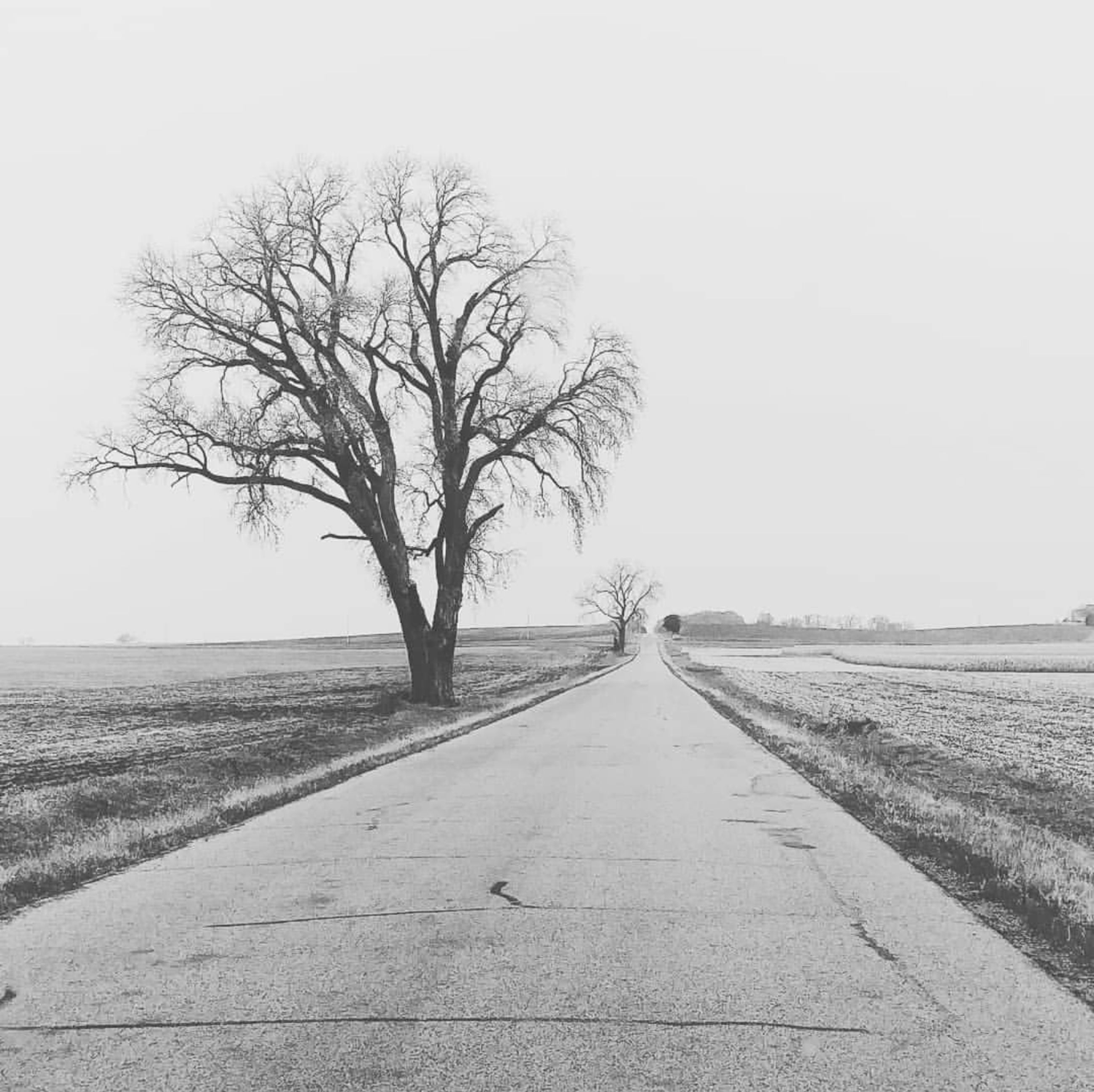 direction, landscape, road, the way forward, environment, sky, tree, bare tree, tranquil scene, transportation, plant, no people, vanishing point, tranquility, nature, diminishing perspective, scenics - nature, field, land, beauty in nature, outdoors