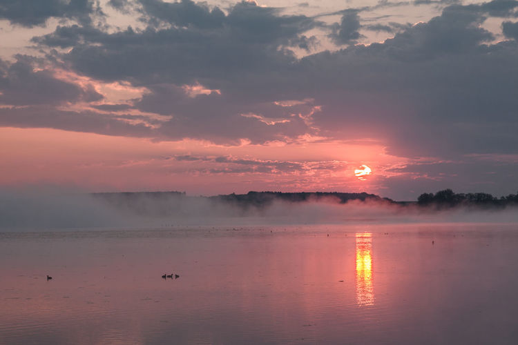 Federsee Animal Themes Beauty In Nature Bird Cloud - Sky Day Fog Foggy Morning Lake Nature No People Outdoors Reflection Scenics Sky Sun Sunset Tranquil Scene Tranquility Water