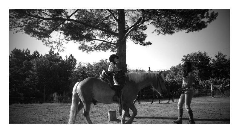 Tree Horse Outdoors Nature Animal Themes PureJoy Punkrock Childhood Summer ☀ Horselove Just Chillin' Purepunk EyeEmNewHere