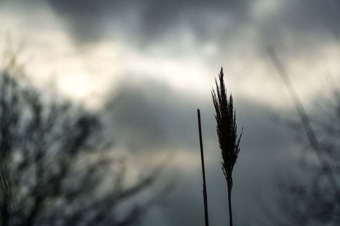 Detail view - of a plant against blury sky wit sunlights coming through Frozen Beams Of Light Beauty In Nature Bokeh Close-up Cold Day Focus On Foreground Growth Nature No People Outdoors Plant Sky Sun Beams Tranquility Water
