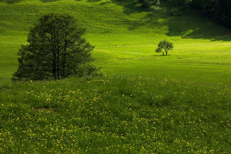 View of green landscape