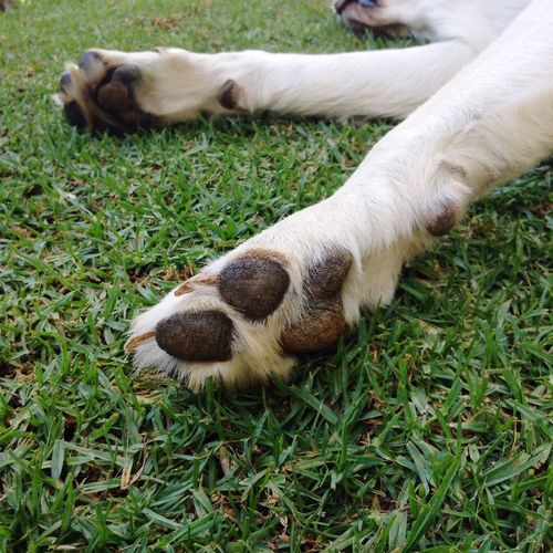 View of dog's paws on grassy field