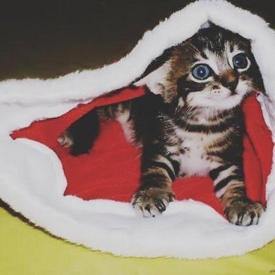 Katy ♥ minha gata sequestrada :'( Sdds Cat Cute Desalmados amor