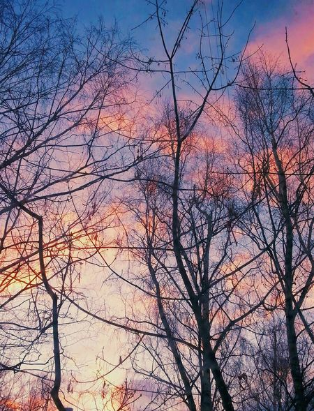 Nature Sky Beauty In Nature Tree Sunset No People Day Moscow Filosofía