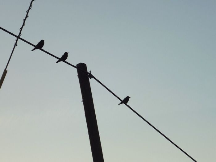 Low angle view of birds perching on power lines against clear sky