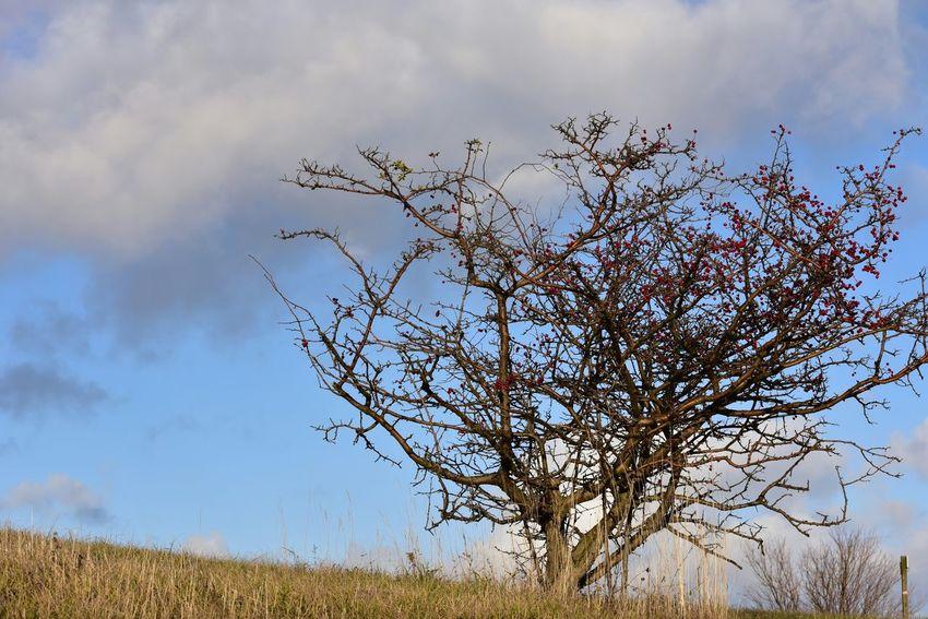 Landschaften Lanscape Nature Gernany Harz Deutschland Eyemnaturelover Baum Tree Herbst Autumn Collection Autumn