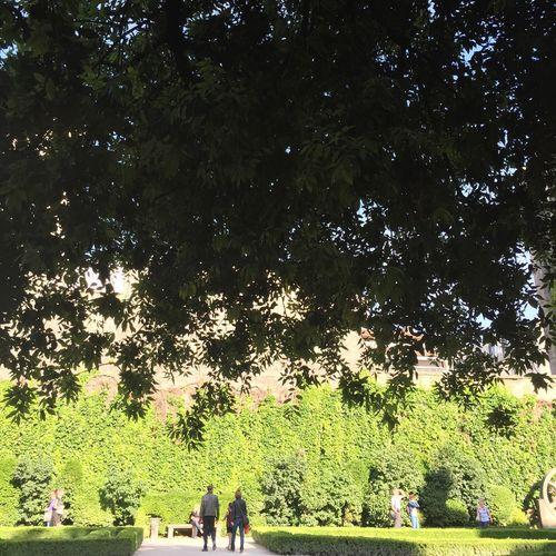 Nature #tree #garden #oak Paris