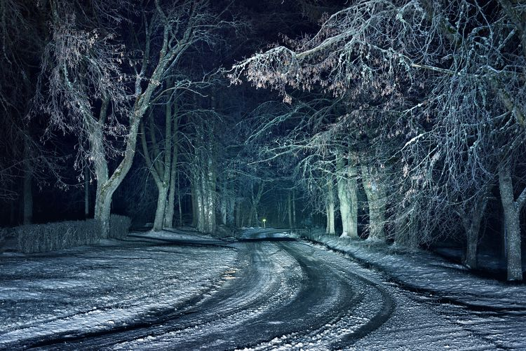 Empty road amidst trees during winter at night