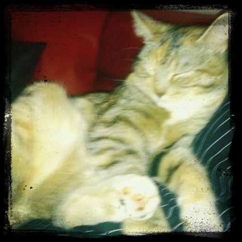 cat content :-D Cat Content