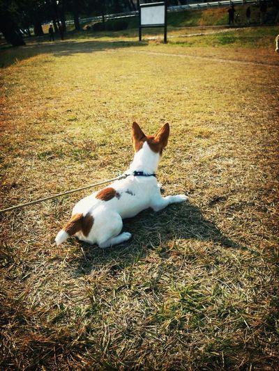 Waiting Dog Jackrussellterrier Max Takahashi