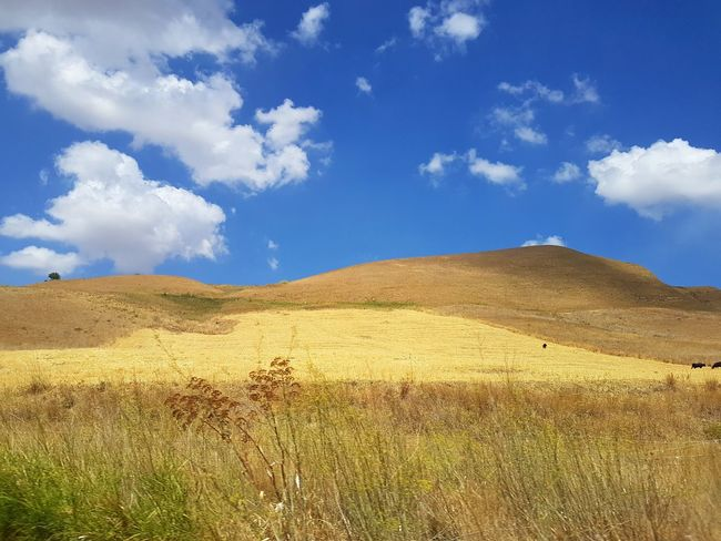Countryside Farmland Arid Landscape Nature Tranquil Scene Landscape_Collection Rural Scene Scenic Landscapes Scenic Italy Visititaly Yellow EyeEm Selects Mountain Blue Sand Dune Tree Sky Landscape Cloud - Sky Plant Mountain Range Arid Climate Semi-arid Desert