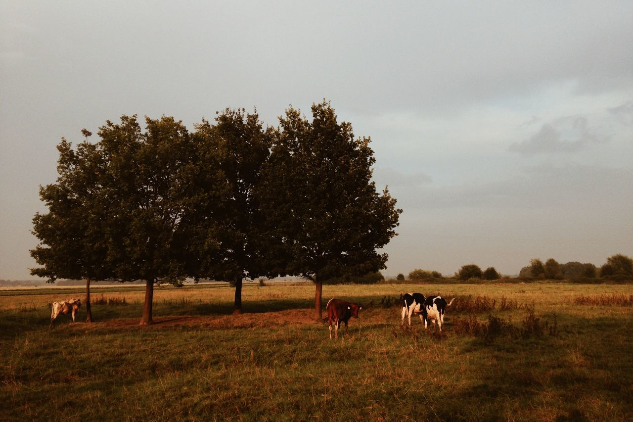tree, animal themes, domestic animals, horse, field, mammal, nature, grass, cow, cattle, livestock, landscape, grazing, tranquility, farm animal, beauty in nature, no people, sky, outdoors, growth, day