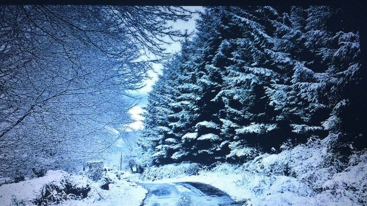 Snow Winter Cold Temperature Weather Nature Beauty In Nature No People Scenics Tree Tranquil Scene Tranquility Outdoors Night Transportation Road Landscape Frozen Sky Bare Tree Snowing Ireland The Great Outdoors - 2017 EyeEm Awards