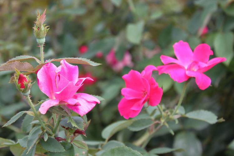 Pink Fresh Flowers Pink Flower Power