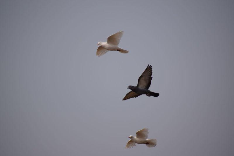 Birds Fliying Birds Freedom EyeEmNewHere