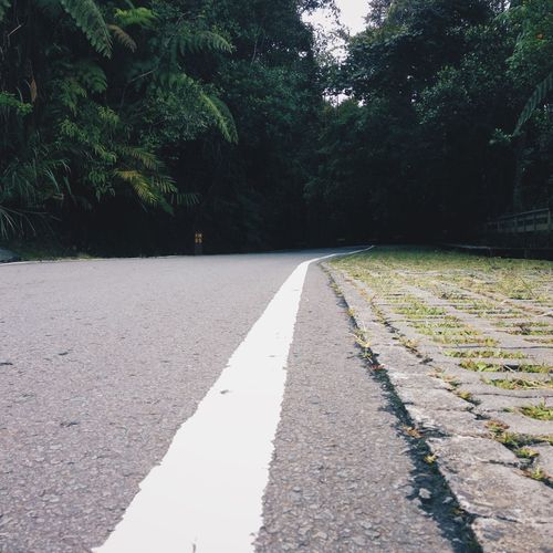 Surface level of road along trees