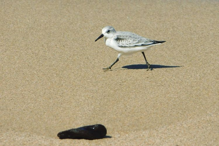 EyeEmReady Maui Hawaii Hawaii Bird Bird Animal Themes Animals In The Wild Sand One Animal Animal Wildlife EyeEmNewHere