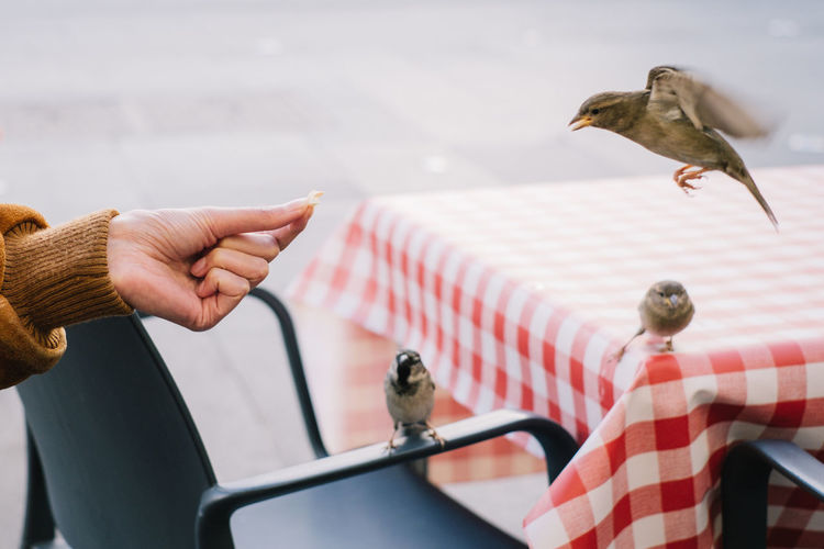 birds birds birds Animal Themes Animal Wildlife Animals In The Wild Bird Close-up Day Domestic Animals Focus On Foreground Holding Human Body Part Human Hand Indoors  Mammal One Animal One Person People Perching Real People Sparrow