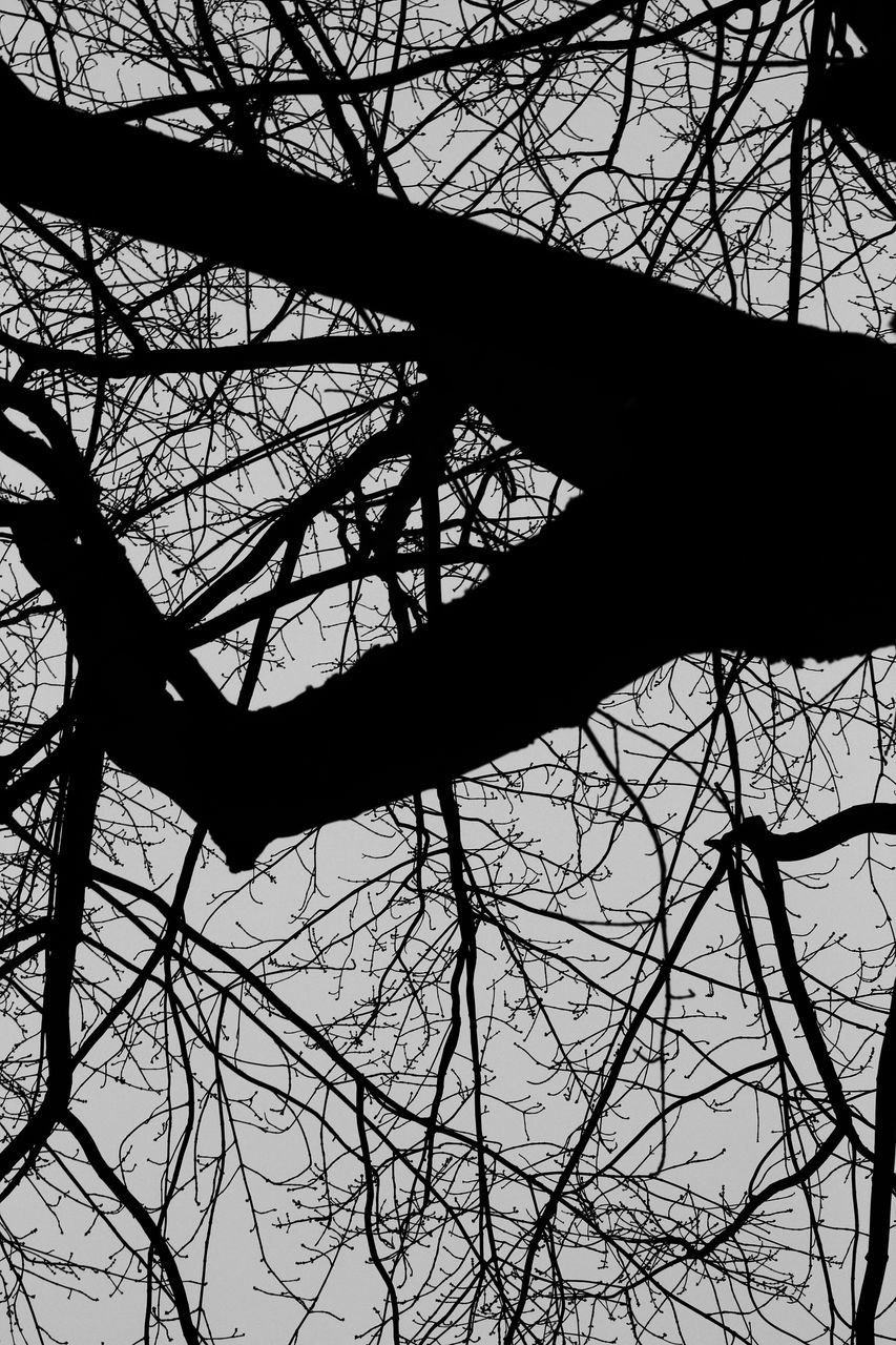tree, bare tree, silhouette, branch, low angle view, outdoors, day, no people, nature, sky, basketball - sport
