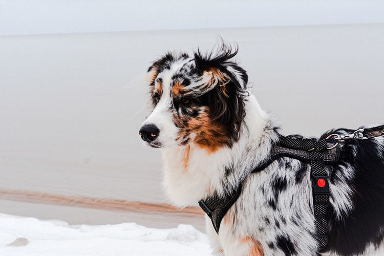 Close-up of a dog in snow on a beach