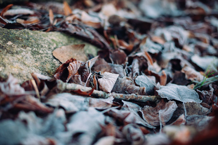 Close-up of dried leaves on fallen tree