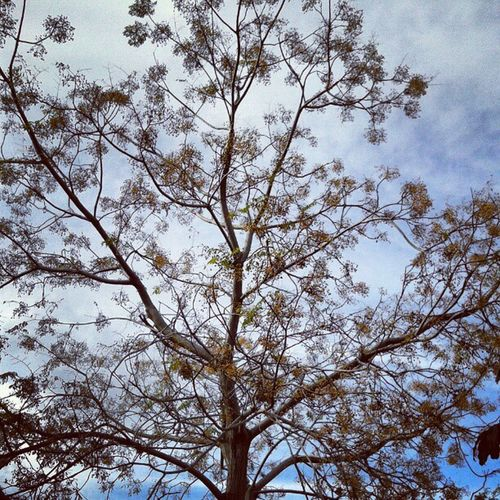 Zarzana5te Tree Blue Sky