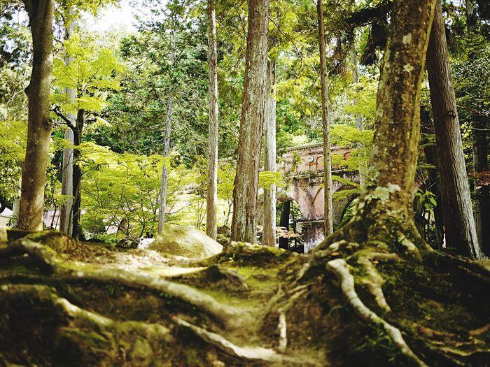 南禅寺 水路閣 Lumix Japan 2015  Trip Tree Kyoto Green Kyoto,japan Japan Photography Streetphotography Tree_collection