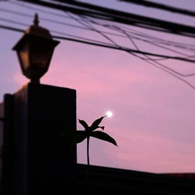 Purple Sky Moon Silhoutte & Sky Silhoutte Photography