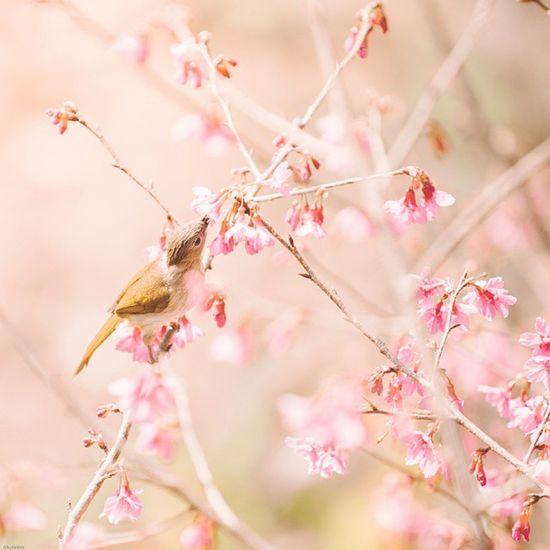 In the pink. Vscocam Feed  Bird Pink Thailand Thailand_allshots Igersthailand Sublimewilderness Grid01