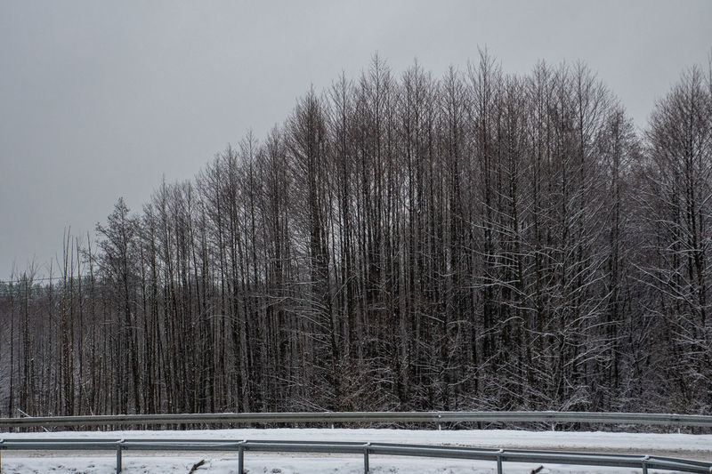View of bare trees in forest during winter