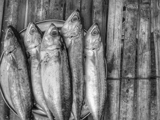 Mackerel Mackerel Fish Fish Food