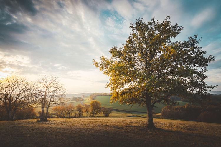 burgandy - France - 2016 ©sebastien.rossi Bourgogne France Autumn Burgandy Cloud - Sky Landscape Sky Sunlight Tree