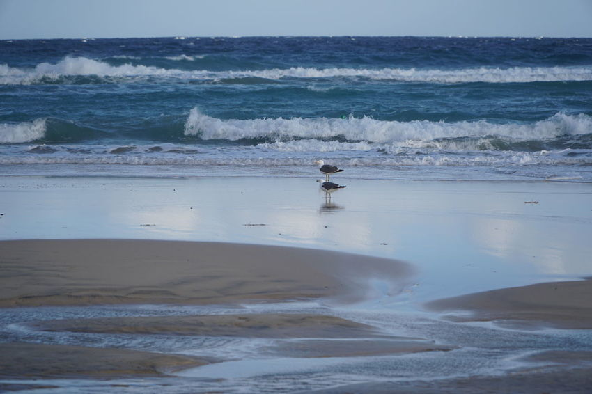 two doves Fuerteventura Animal Themes Animals In The Wild Beach Beauty In Nature Bird Day Horizon Over Water Mammal Nature No People One Animal Outdoors Sand Scenics Sea Sky Tranquility Two Doves Water