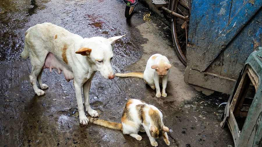 High angle view of dogs on street