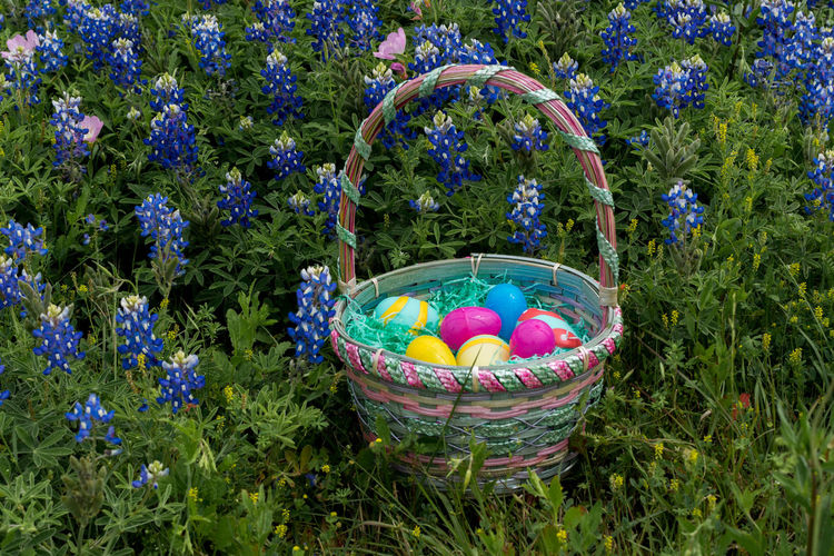Easter Basket Filled With Colorful Eggs Sitting In Field Of Bluebonnets Easter Easter Basket  Field Holiday Texas Basket Blue Bluebonnets Celebration Container Day Easter Easter Egg Egg Eggs Field Flower Flowering Plant Food Grass Growth Land Multi Colored Nature No People Outdoors Plant Plastic Easter Eggs Spring Vulnerability