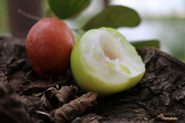 Apple - Fruit Close-up Day Food Food And Drink Freshness Fruit Green Color Healthy Eating Monkey Apple Nature No People Outdoors Ready-to-eat